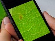 Иллюстрация к новости Линза стоимостью три цента может превратить смартфон в микроскоп